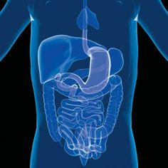 Probiotics Key To Chemo Survival -