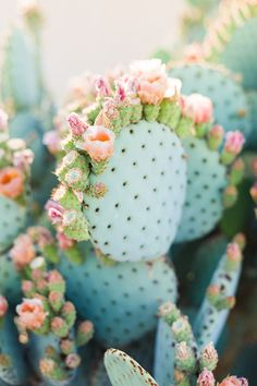 Image gallery by Leah Hope Photography Desert Aesthetic, Flower Aesthetic, Blue Aesthetic, Aesthetic Pictures, Aesthetic Clothes, Hope Pictures, Pretty Pictures, Hope Images, Cactus Art