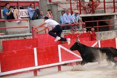 Cours Camargaise Cow