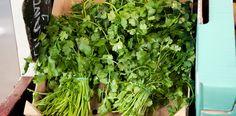 Bama - Grønnsaker - Urter - Koriander Parsley, Celery, Herbs, Vegetables, Cilantro, Veggies, Herb, Vegetable Recipes