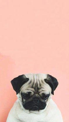 Dog, pug, and wallpaper image dog wallpaper iphone, cute dog wallpaper, cute Dog Wallpaper Iphone, Tier Wallpaper, Animal Wallpaper, Tumblr Wallpaper, Screen Wallpaper, Cool Wallpaper, Seagrass Wallpaper, Paintable Wallpaper, Colorful Wallpaper