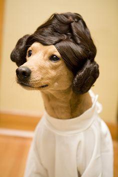 Let's play Star Wars. I'm Princess Leah.