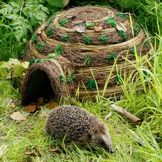 Hedgehog numbers have declined dramatically in the past years, help them by having a hedgehog house in your garden with a bowl full of nourishing hedgehog food Hedgehog Food, Hedgehog House, Potager Bio, Bug Hotel, Sensory Garden, Urban Nature, Garden Animals, Garden Pests, Animal House