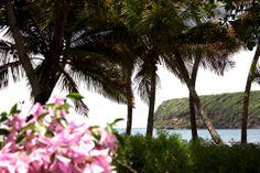 homevialaura #travel #grenada #caribia #sea #ocean #beach #lasagesse #palmtrees
