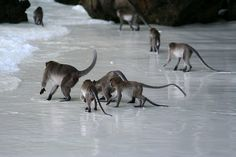 Monkey Island - Phi Phi, Thailand by mandimike, via Flickr