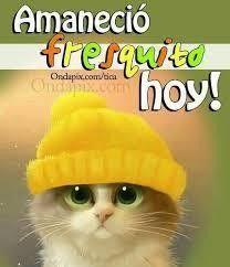 Pin De Magda Oyarzo En Imagenes Y Frases Divertidas Memes Divertidos Sobre El Viernes Buenos Dias Perros Memes De Viernes