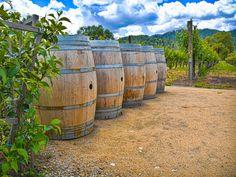 Go wine tasting in Napa Valley, California.