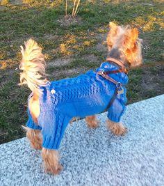 Вяжу на заказ маленьким собачкам. Knitting Patterns For Dogs, Dog Clothes Patterns, Crochet Dog Clothes, Pet Clothes, Diy Dog Shampoo, Dog Sweater Pattern, Dog Sweaters, Bichon Frise, Christmas Knitting