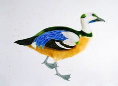 """Stellers Eider, 2005. Watercolor and gouache on paper, 22"""" x 30"""""""