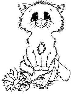 Sorry - kittie
