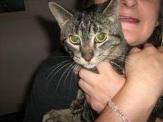 """#Podarim Muce #Muce Podarim #Vse za Mačke #Hrana za Mačke ...   Spletna stran http://podarim-muce.org zopet v polnem teku ...   Vabljeni vsi ljubitelji teh mijavkajočih kosmatinčkov. Možno tudi   oglaševanje na strani in več ... Iščemo odgovorne, tople domove za   kosmate mijavčke, vseh velikosti in starosti! """"NUJNO""""   http://podarim-muce.org"""