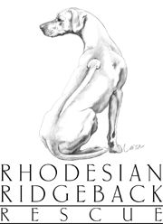 """As a Rhodesian Ridgeback owner, you need to be committed to the dog's needs -- exercise, obedience training, socialization, understanding, patience and plenty of """"quality"""" time. Sometimes, this means you will have to re-arrange your work or other schedules to attend the dog's needs, or arrange for someone else to do this for you."""
