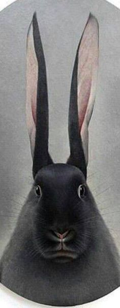 LONG TALL RABBIT