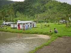 Tilipia pond in Fiji Figi Islands, Fiji, Pond, Country Roads, Water Pond, Garden Ponds