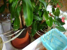 Partiamo per le vacanze come avere cura e innaffiare le piante, Piante d'appartamento, esterni, giardino, annaffiatura, innaffiatura, vacanze, lasciare, curare, partenza, partire, come, pianta, vacanza