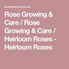 Rose Growing & Care / Rose Growing & Care / Heirloom Roses - Heirloom Roses