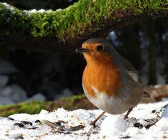 Beautiful Birds, Animals, Animal Pictures, Christmas, Animales, Animaux, Animal, Animais