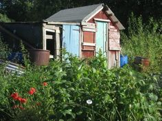 Our allotment shed!