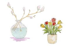 Botanical watercolor sketches tulips and magnolia