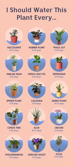 How Often To Water Houseplants - How To Water Plants garden How to Water. - How Often To Water Houseplants – How To Water Plants garden How to Water the 15 Most Popu - Organic Gardening, Gardening Tips, Indoor Gardening, Gardening Supplies, Gardening Gloves, Gardening Courses, Succulent Gardening, Garden Terrarium, Terrariums