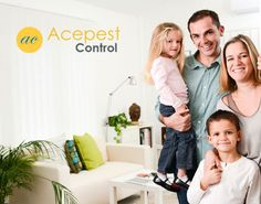 Ace Pest Control Brisbane provides all types of pest extermination services across Brisbane. Book our fully experienced pest controller team today! Roaches, Fleas, Indian Meal, Best Pest Control, Bees And Wasps, Yellow Jackets, Removal Services, Bed Bugs