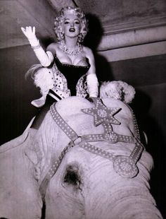 Marilyn Monroe riding a pink elephant at a benefit event at Madison Square Garden, March 1955.