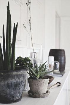 Cactus con pared blanca