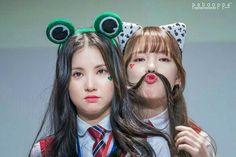 Kpop Girl Groups, Kpop Girls, Boy Groups, Korean Group, Korean Girl Groups, Jung Eun Bi, Sistar, G Friend, Nayeon