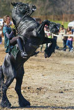 like at Kryal Castle ♡♡ Most Beautiful Horses, Pretty Horses, Animals Beautiful, Horse Rearing, Friesian Horse, Andalusian Horse, Arabian Horses, Big Horses, Black Horses