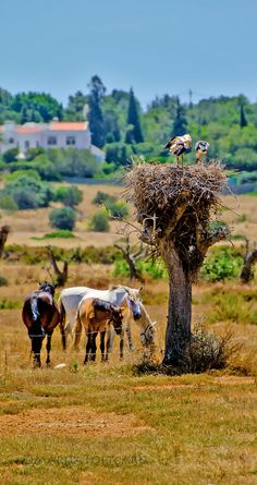 and in Portugal. Incredibly hot that day, you can even see that in the background. 2 Days Trip, Day Trips, Portugal, Sea Activities, Iberian Peninsula, Storks, Sunny Beach, Nature Animals, Farm Life