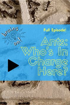 We have a lot to learn from ants. This episode digs into the hierarchy of ant colonies (spoiler alert: there is none) and why they walk in a straight line (spoiler alert: they don't). Ant Insect, Ant Colony, Magic School Bus, Explain Why, Earth Day, Scientists, Ants, Robots, Programming
