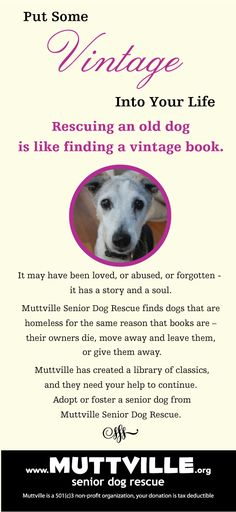 """""""Vintage"""" ad for Muttville Senior Dog Rescue. An oldie but a goodie! #seniordogsrule. Design by www.switchblade-studios.com"""
