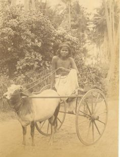 - Small Ox Cart - Colombo Ceylon (Sri Lanka) c1880 ./tcc/