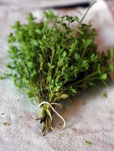 Thyme.Used in spells and charms to attract loyalty,affection,and the good opinion of others.Burn as an incense or use in charms and hang in the home for banishing and purification of the home.Bring into the home to attract good health for all occupants.Use in dream pillows to prevent nightmares and facilitate a night of restful sleep.