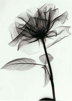 amazing xray flower for tattoo. Bild Tattoos, Body Art Tattoos, New Tattoos, Sleeve Tattoos, Tattoo Art, Iris Tattoo, Tatoos, Tattoo Pics, Xray Flower