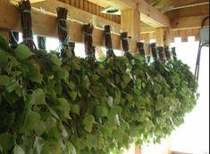 сушка березовых веников для бани