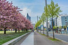 Auch wir waren am Wochenende an dem zur Zeit wichtigsten Fotohotspot in Leipzig  Jetzt sind wir ganz gespannt auf eure Ergebnisse! Bitte teilt sie in die Kommentare wir sind sehr gespannt. Einen schönen Start in die Woche! #leipzigliebe #clouds #leipzig #leipzigcity #leipzigtravel #leipziglove #leipzigleuchtet #colorful #spring #springtime #love #follow #like #sonya7 #picoftheday