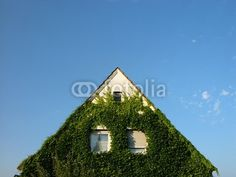 Begrünte Fassade eines Wohnhaus vor blauem Himmel in Wettenberg Krofdorf-Gleiberg bei Gießen