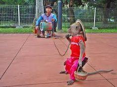 Governor Jakarta Bans Monkey Business - News - Bubblews
