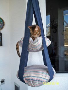 My cats will have little contraptions like this to do with what they wished.
