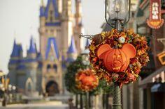 2020 Fall Fun At Walt Disney World Walt Disney World, Mundo Walt Disney, Disney Parks Blog, Disney World Magic Kingdom, Disney World Resorts, Disney Disney, Disney Destinations, Disney Vacations, Disney Trips