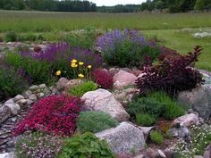 Great mix of foliage and flowers