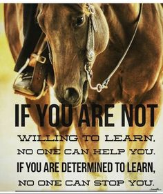 You can lead a horse to water, but you can't make it think. Rodeo Quotes, Equine Quotes, Cowboy Quotes, Cowgirl Quote, Equestrian Quotes, Hunting Quotes, Horse Sayings, Girl Sayings, True Quotes