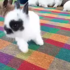 If you could only pick one bunny to go home with, which one would it be ? Cute Wild Animals, Baby Animals Super Cute, Cute Little Animals, Cute Funny Animals, Animals Beautiful, Cute Cats, Pet Bunny Rabbits, Pet Rabbit, Cute Baby Bunnies