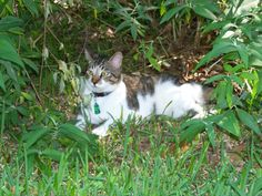 #PurinaSweeps Moxie enjoying the grass