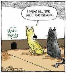 Cat to Cat upscale conversation. ..pj