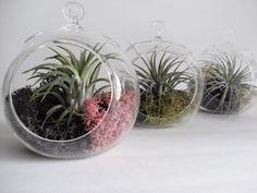 Hanging Glass Terrarium Vase, Glass Orb, Hanging Plant Terrarium Vase.