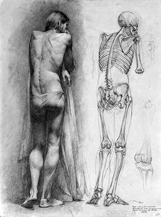 full figure and skeleton - figure reference