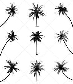 Palm trees — Vector EPS #cut #forest • Available here → https://graphicriver.net/item/palm-trees/1375225?ref=pxcr