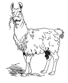Llama Free Printable Coloring